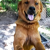 Adopt A Pet :: Rocky - West Columbia, SC