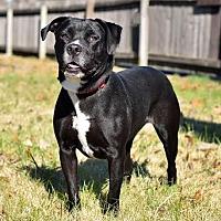 Adopt A Pet :: Cinder - Mt. Vernon, IN
