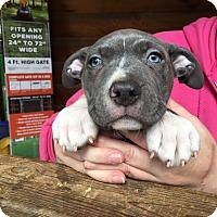 Adopt A Pet :: Mr Dean - Rogue River, OR