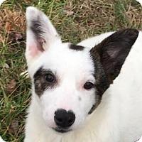 Adopt A Pet :: Dottie - Cookeville, TN