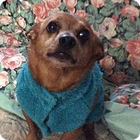 Adopt A Pet :: Rojo - Mary Esther, FL