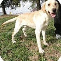 Adopt A Pet :: Carter - Lewisville, IN