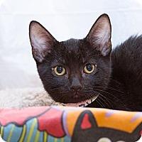 Adopt A Pet :: Jazzy - Irvine, CA