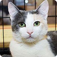 Adopt A Pet :: Lindsey - Irvine, CA
