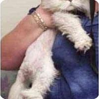 Adopt A Pet :: Junior - Davis, CA