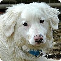 Adopt A Pet :: iollan - Bellevue, NE