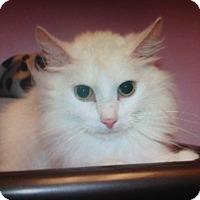 Adopt A Pet :: Alfredo - Monroe, GA