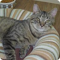 Adopt A Pet :: Rhett - Medina, OH