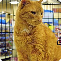 Adopt A Pet :: Simba - Pittstown, NJ