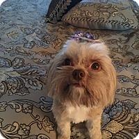 Adopt A Pet :: Hershey - Redding, CA
