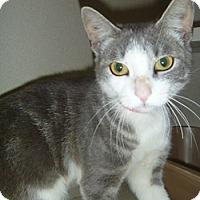 Adopt A Pet :: Olivia Mae - Hamburg, NY