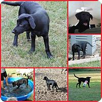 Adopt A Pet :: BELLA - Davenport, FL