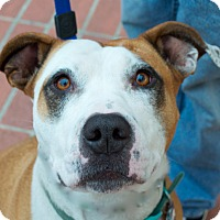 Adopt A Pet :: Maggie Mae - San Francisco, CA