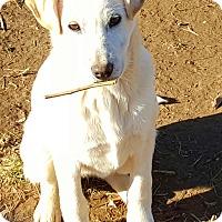 Adopt A Pet :: Lucille - Sussex, NJ