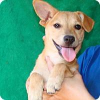 Adopt A Pet :: Razza - Oviedo, FL