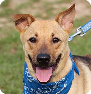 Shepherd (Unknown Type) Mix Dog for adoption in San Francisco, California - Caitlin