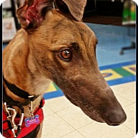 Adopt A Pet :: Wilson - Geneva, OH