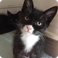 Adopt A Pet :: Vito - Erwin, TN