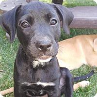 Adopt A Pet :: Essie - Dayton, OH