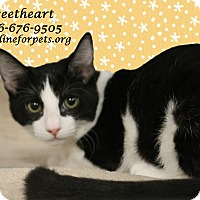 Adopt A Pet :: A Kitten Girl: SWEETHEART - Monrovia, CA