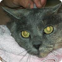 Adopt A Pet :: Bella - Mexia, TX