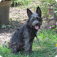 Adopt A Pet :: BRUCE WAYNE - Newburgh, NY