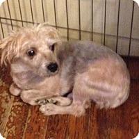 Adopt A Pet :: Forrest - Memphis, TN