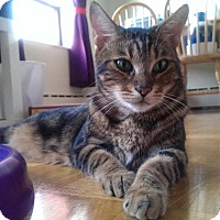 Adopt A Pet :: Kobi - Toronto, ON