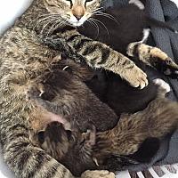 Adopt A Pet :: Essay - St. Louis, MO