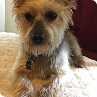 Adopt A Pet :: Meko - Dallas, TX