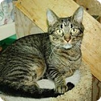 Adopt A Pet :: Lady Madonna - THORNHILL, ON