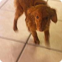 Adopt A Pet :: Ditch - Fort Worth, TX