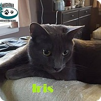 Adopt A Pet :: Iris - Follows you around! - Huntsville, ON