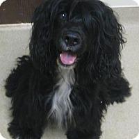 Adopt A Pet :: Joe - Gary, IN