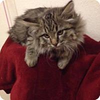 Adopt A Pet :: Rudolf - Fort Collins, CO