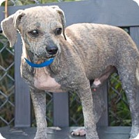 Adopt A Pet :: CoCo - Lakeland, FL
