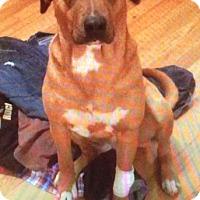 Adopt A Pet :: Gracie - Cairo, GA