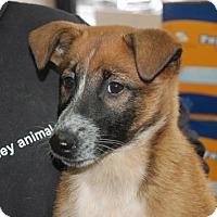 Adopt A Pet :: Marta - Brooklyn, NY