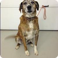 Adopt A Pet :: Nellie - Radford, VA