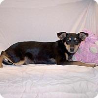 Adopt A Pet :: 16-d12-026 Dahlia - Fayetteville, TN
