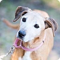 Adopt A Pet :: Maisie - Houston, TX