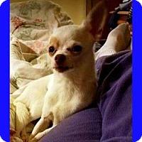 Adopt A Pet :: Rico - Mt. Clemens, MI