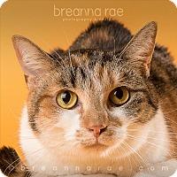 Adopt A Pet :: Ophelia - Sheboygan, WI