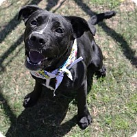 Adopt A Pet :: NOEL - Houston, TX