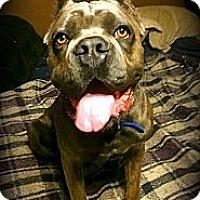 Adopt A Pet :: Eli - Cypress, CA