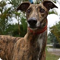 Adopt A Pet :: Kelso - West Palm Beach, FL