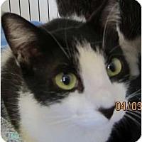 Adopt A Pet :: Angelina - Bunnell, FL