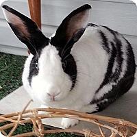 Adopt A Pet :: Virgil - Williston, FL