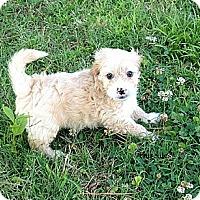 Adopt A Pet :: Hercules - Hampton, VA