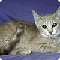 Adopt A Pet :: Patsy - Powell, OH